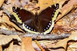Butterfly_26