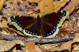 Butterfly_28