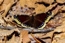 Butterfly_32