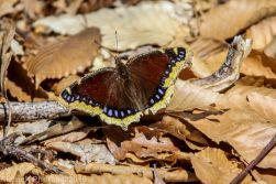 Butterfly_39