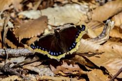 Butterfly_41