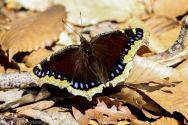 Butterfly_44