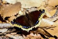 Butterfly_46