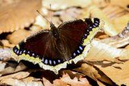 Butterfly_49