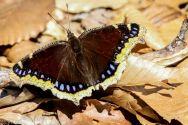 Butterfly_51