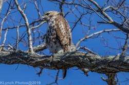 Hawk_22