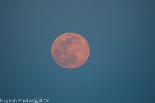 Moon_50