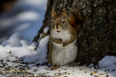 RedSquirrel_14