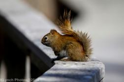 RedSquirrel_28