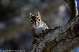 RedSquirrel_37