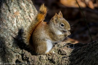 RedSquirrel_38