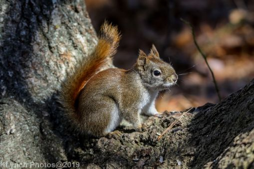RedSquirrel_41