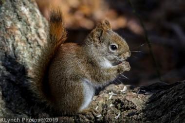 RedSquirrel_45
