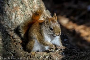 RedSquirrel_46