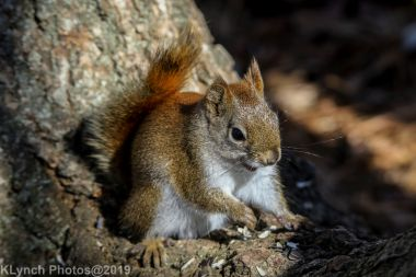 RedSquirrel_46