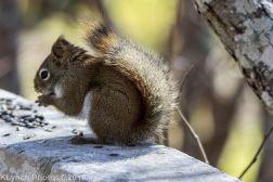 RedSquirrels_12