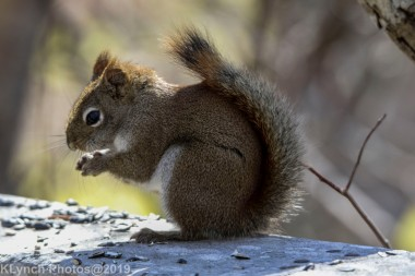 RedSquirrels_20