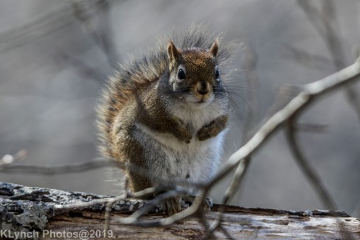 RedSquirrels_22