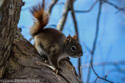 RedSquirrels_24
