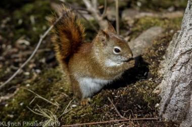 RedSquirrels_27