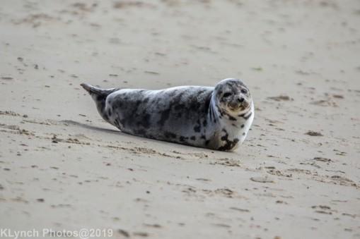 SealB_33