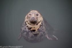 seals_23