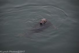seals_33