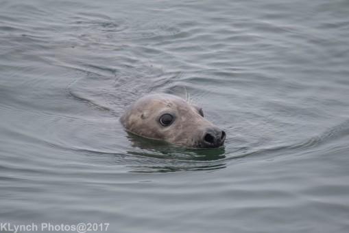 seals_49