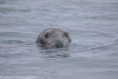 seals_87
