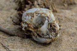 Skeleton_5