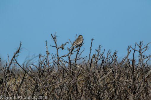 SparrowA
