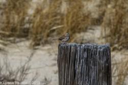 SparrowB
