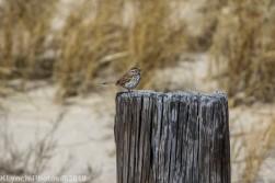 SparrowB_1