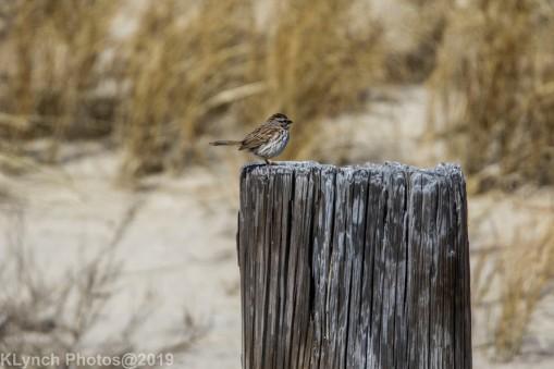 SparrowB_2
