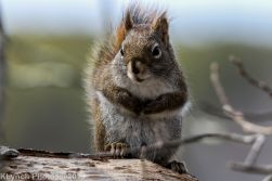 Squirrel_14