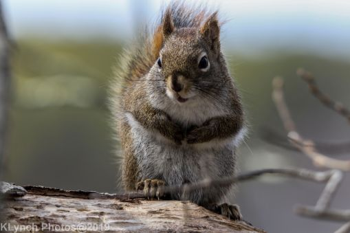 Squirrel_16