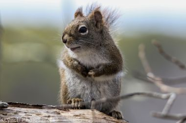 Squirrel_18