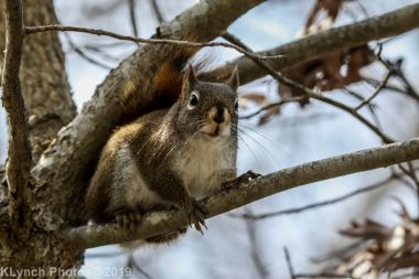 Squirrel_20