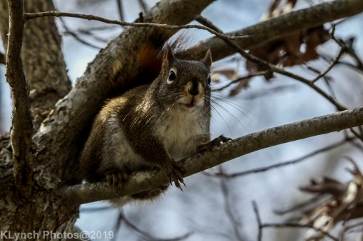 Squirrel_22