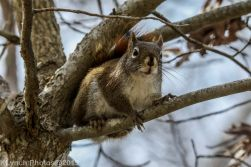 Squirrel_23