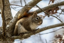 Squirrel_24