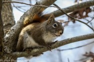 Squirrel_25