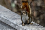 Squirrel_27