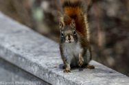 Squirrel_28