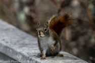 Squirrel_29