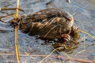 Beaver_48