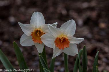 flowers_10