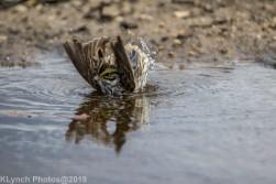 Sparrow_18