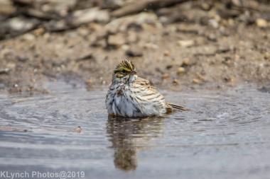 Sparrow_25