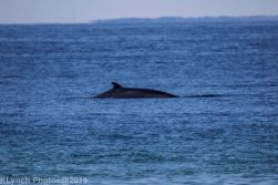 Whales_1